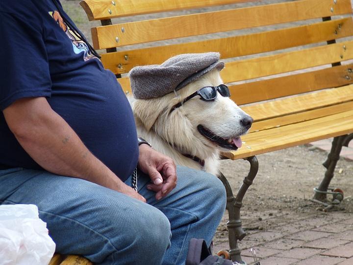 Quebec-Crazy-Dog