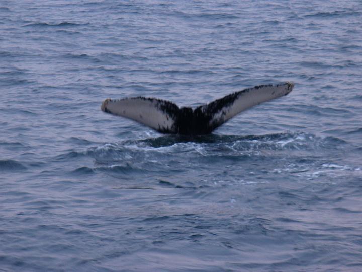 Whale-5