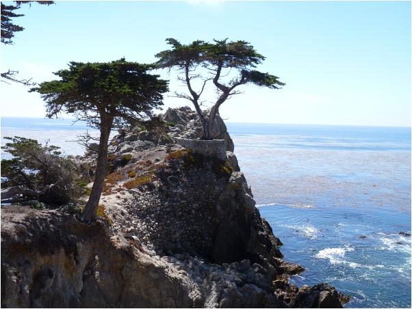 Lone_Cypress2