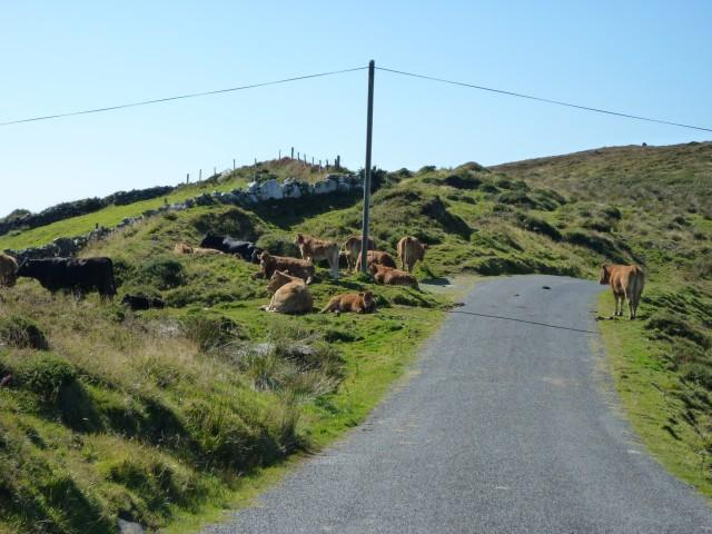 Kuhstau Ring of Beara