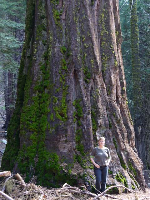 Mariposa Grove im Yosemite NP