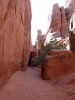 Arches NP-_1