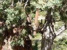 Bryce Canyon NP -_12