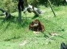 San Diego Zoo_8