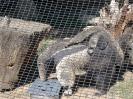 San Diego Zoo_1