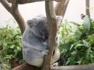 San Diego Zoo_3