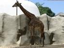 San Diego Zoo_13