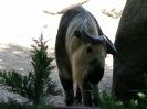 San Diego Zoo_11