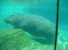 San Diego Zoo_23