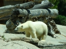 San Diego Zoo_24