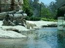 San Diego Zoo_12