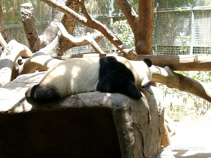 San Diego Zoo_6