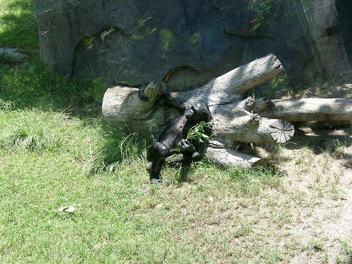 San Diego Zoo_9