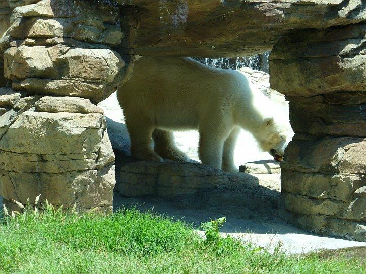 San Diego Zoo_25